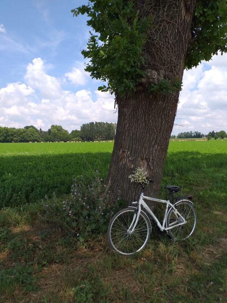 bicicletta appoggiata a un albero con dietro campo verde