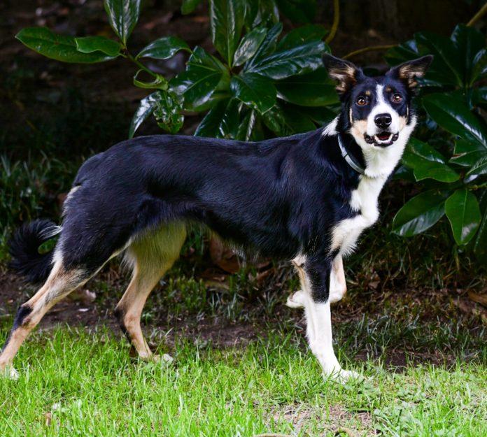 cane cloe mascotte agriturismo pet friendly cascina farisengo in vacanza con il proprio cane lombardia cremona